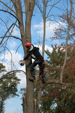 arborist while working on a tree